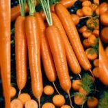 AGX 16-40 F1 семена моркови тип Нантес 105-110 дн. 18-20см (Agri Saaten)