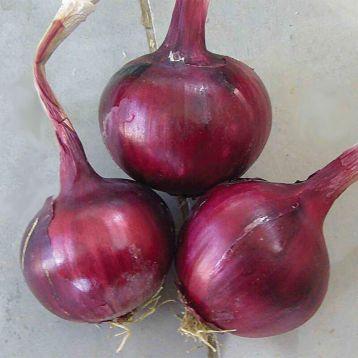 Фабула F1 семена лука репчатого озимого красного (Isi Sementi)