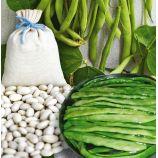 Маркони семена фасоли спаржевой плосколопатковой зел. (Hortus)