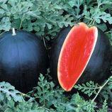 Красень семена арбуза раннего 65-75дн. окр. 3-4кг темно.-зел. (Семена Украины)