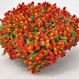 Кенди F1 оранжевый семена антирринума каскадного мультидраже (Sakata)