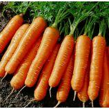 Артек семена моркови (Яскрава)