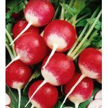 Краковянка семена редиса БК среднераннего 25-28 дн. 15-25 гр. окр. (Яскрава)