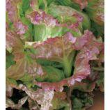 Тренто Красный семена салата среднего 57 дн. 300-400 гр. 25 см кочан. красн. (Яскрава)