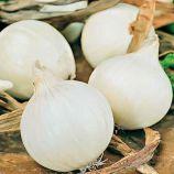 Али-баба семена лука репчатого среднего 90-110 дн. 150-200 гр. белого (Яскрава)