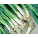 Апрельский семена лука тип Батун раннего 95-100 дн. 200-300 гр. (Яскрава)