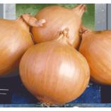 Вольский семена лука репчатого позднего 125-140 дн. 90-160 гр. окр. (Яскрава)