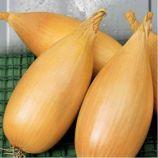 Любчик семена лука репчатого среднего 85-100 дн. 100-150 гр. цилиндр. (Яскрава)