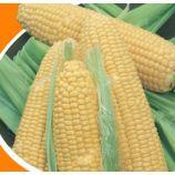 Джульетта семена кукурузы сахарной ультраранней (Яскрава)