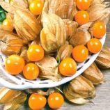 Амарилия семена физалиса овощного (Яскрава)