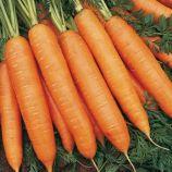 Бангор F1 семена моркови Берликум PR (1,6-1,8 мм) (Bejo)
