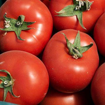 Барибин F1 семена томата индет. ультрараннего 90-100 дн. окр.-припл. 180-200г красный (Syngenta)