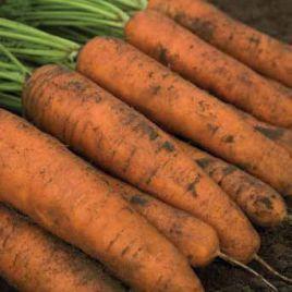 Белградо F1 (1,6-1,8мм) семена моркови Берликум средней 111 дн. (Bejo)
