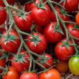 КС 959 F1 (KS 959 F1) семена томата индет. черри раннего 105-115 дн. 20-30 гр. (Kitano Seeds)