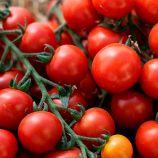 КС 4559 F1 (KS 4559 F1) семена томата индет. черри раннего 105-115 дн. окр. 15-25 гр. (Kitano Seeds)