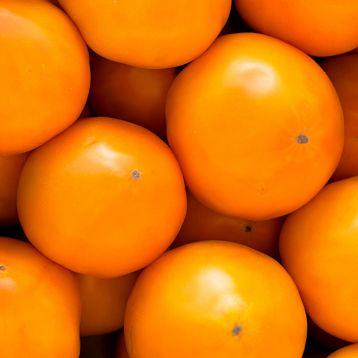 Ямамото (КС 10) F1 семена томата индет. раннего 105-115 дн. окр.-прип. 250-300г желт. (Kitano Seeds)