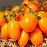 КС 1430 (KS 1430) F1 насіння томата індет. раннього слив. жовт. 100-120 г (Kitano Seeds)