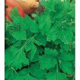 Ароматная семена петрушки листовой (Свитязь)