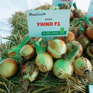 Унико F1 семена лука репчатого (Moravoseed)