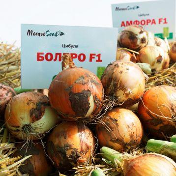Болеро F1 семена лука репчатого тип Райнсбургер/Американский среднего 123-128 дн. 140 гр. желт. (Moravoseed)