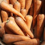 СВ 7381 ДХ F1 (SV 7381 DH F1) (1,8-2,0) семена моркови Шантане средней 110-115 дн. 16-18 см (Seminis)