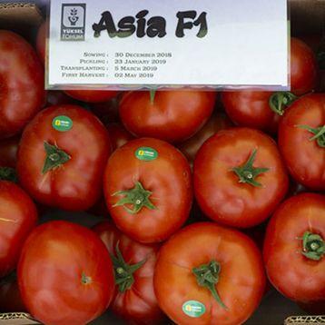 Азия F1 семена томата индет. среднераннего 100-110 дн. окр.-прип. 300-350г красный (Yuksel)