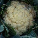 Кабрал F1 семена капусты цветной средней (Syngenta)