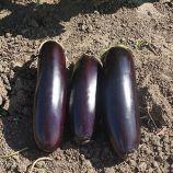 Мадалена F1 семена баклажана (Vilmorin)