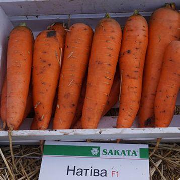 Натива F1 семена моркови Шантане ранней 95 дн. (Sakata)