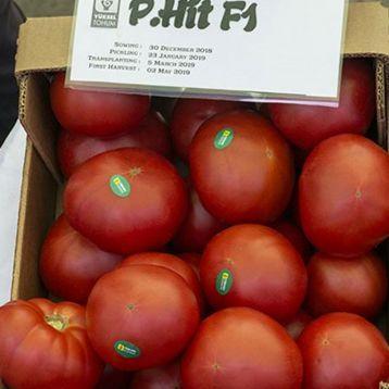 Пинк Хит F1 семена томата индет. раннего 230-280 гр. роз. (Yuksel)