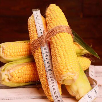 кукуруза Роттердам f1