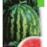 Мелитопольский семена арбуза среднего 80-85 дн. овал. 4,5-6 кг (GL Seeds)