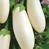 Вкус грибов семена баклажана среднего 95-105 дн. овал. 180-250 гр. белого (GL Seeds)