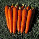 Император семена моркови Флакке среднепоздней 120-130 дн 20-25 см (GL Seeds)