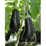 Черный опал семена баклажана среднего 125-128 дн. 150-200 гр. цилиндр. 18-20 см (GL Seeds)