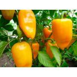 Абрикосовая Фаворитка семена перца сладкого тип Блочный среднего 115-125 дн 120-150 гр 55-7 мм зел/оранж (GL Seeds)