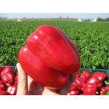 Геракл семена перца сладкого тип Блочный среднего 95-105 дн 200-300 гр 7-9 мм зел/красн (GL Seeds)