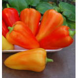 Паланска Бабура семена перца сладкого тип Блочный раннего 80-92 дн 150-200 гр 8-9 мм крем/оранж (GL Seeds)