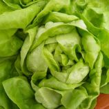 Козима семена салата тип Маслянистый/Баттерхед зел. (Wing Seed)