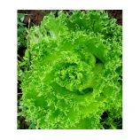 Гранд Рапидс семена салата раннего 250-300 гр. (GL Seeds)
