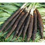 Дуплекс семена скорцонеры (черный корень) (GL Seeds)