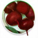 Селянская семена свеклы столовой средней 110-115 дн. 500-600 гр. окр.-припл. (GL Seeds)