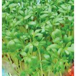 Пикантный семена кресс-салата (GL Seeds)