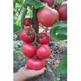 Божественный семена томата дет среднего 200-300 гр роз (GL Seeds)