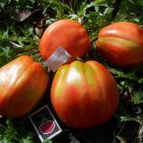 Большая девочка семена томата индет среднего 200-300 гр слив (GL Seeds)