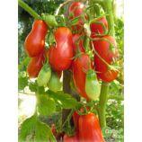 Засолочный деликатес семена томата дет среднего 110-115 дн 80-120 гр слив (GL Seeds)