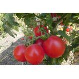 Зинуля семена томата дет раннего 80-85 дн 250-300 гр роз (GL Seeds)