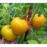 Золотое сердце семена томата индет среднего 100-110 дн сердц 250-400 гр оранж (GL Seeds)