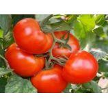 Король рынка семена томата индет раннего окр 800-1000 гр (GL Seeds)