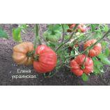 Украинская Олена семена томата индет. раннего 85-105 дн. окр.-припл. 500-700 гр. роз. (GL Seeds)